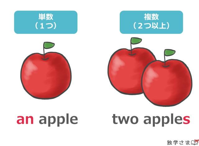 不定冠詞『a/an』は可算名詞の単数形と結びつく