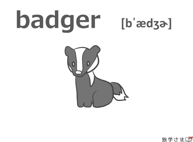 英単語『badger』イラスト