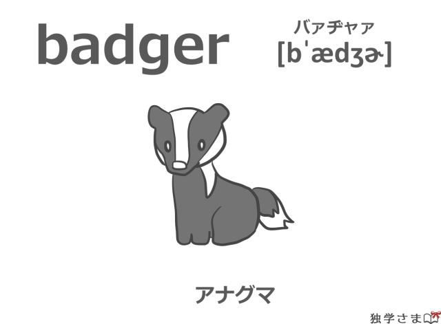英単語『badger』イラスト・意味