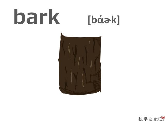 英単語『bark』イラスト