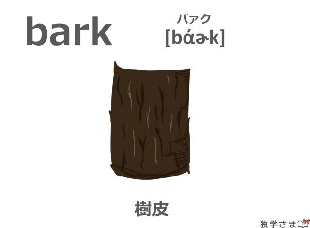 英単語『bark』イラスト・意味