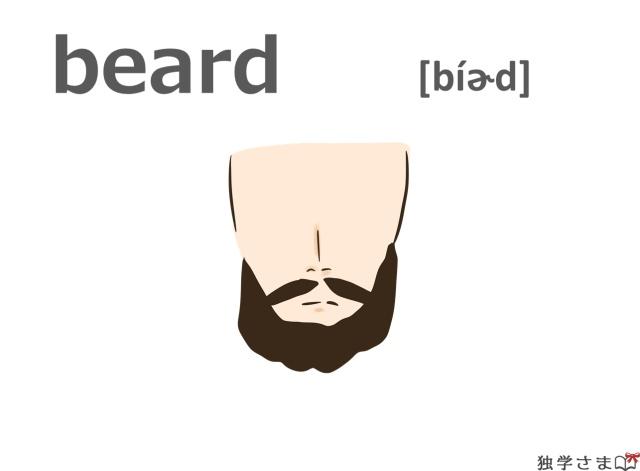 英単語『beard』イラスト