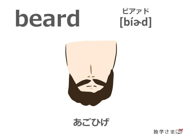 英単語『beard』イラスト・意味