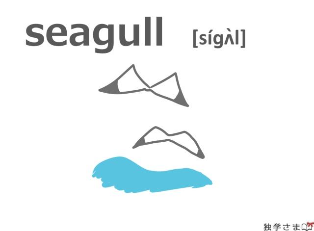 英単語『seagull』イラスト