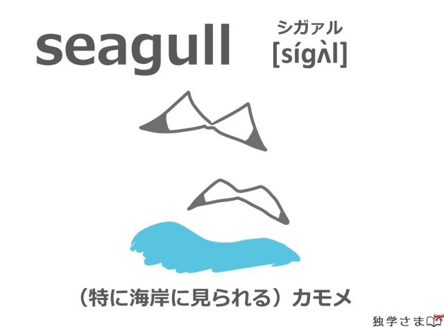 英単語『seagull』イラスト・意味