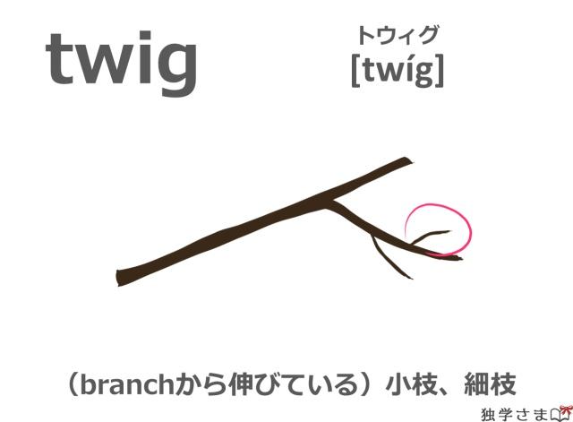 英単語『twig』イラスト・意味