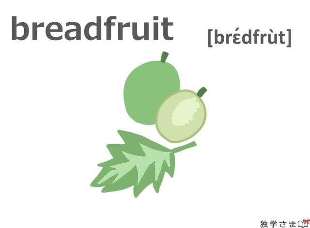 英単語『breadfruit』イラスト