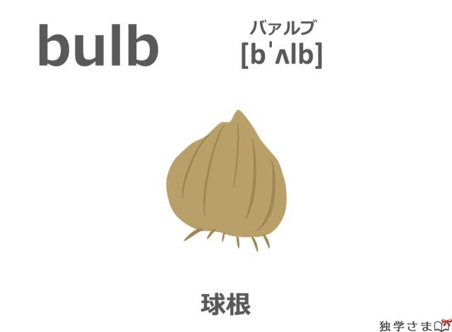 英単語『bulb』イラスト・意味