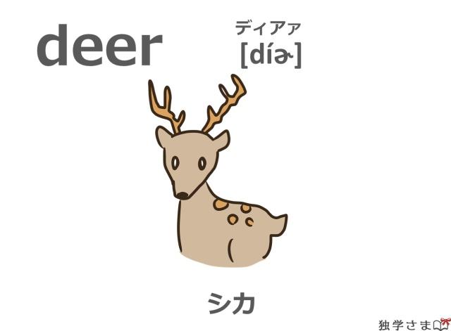 英単語『deer』イラスト・意味