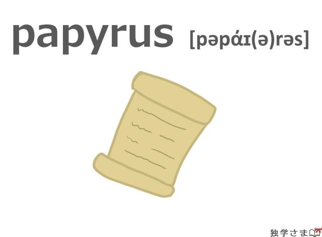 英単語『papyrus』イラスト