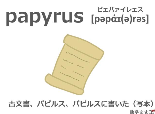 英単語『papyrus』イラスト・意味