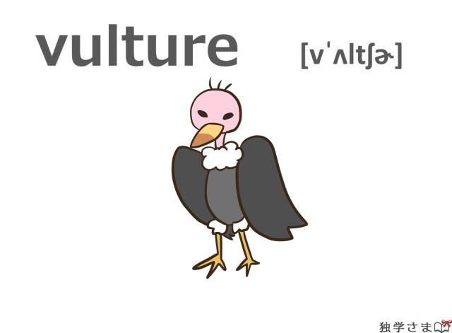 英単語『vulture』イラスト