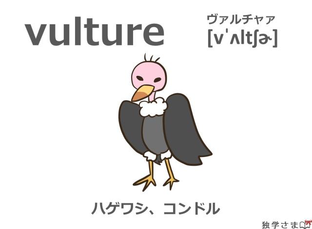 英単語『vulture』イラスト・意味