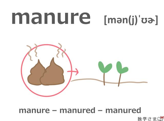 英単語『manure』イラスト