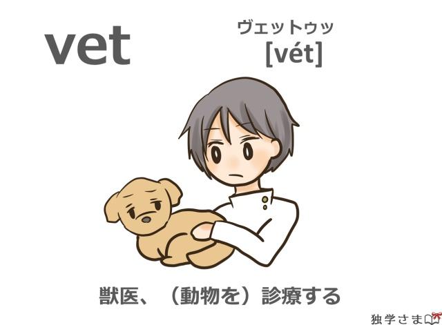 英単語『vet』イラスト・意味・カタカナ