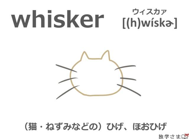 英単語『whisker』イラスト・意味・カタカナ