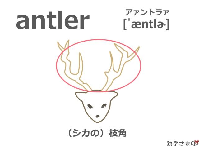 英単語『antler』イラスト・意味・カタカナ