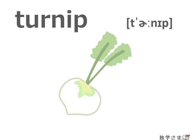 英単語『turnip』イラスト