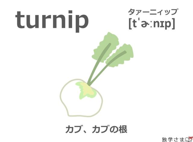 英単語『turnip』イラスト・意味・カタカナ