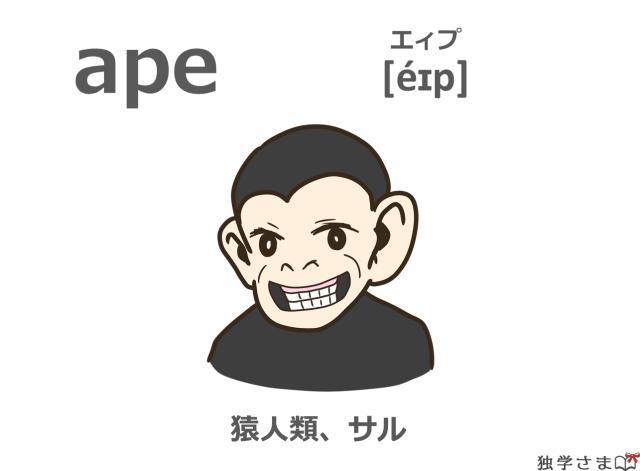 英単語『ape』イラスト・意味・カタカナ