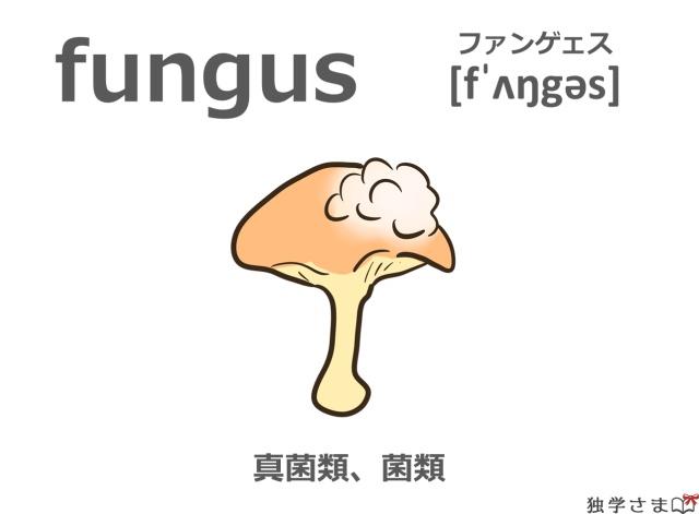 英単語『fungus』イラスト・意味・カタカナ