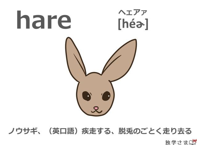 英単語『hare』イラスト・意味・カタカナ