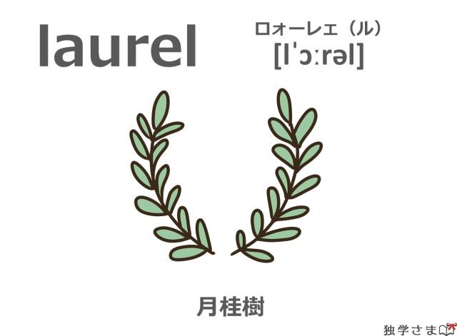 英単語『laurel』イラスト・意味・カタカナ