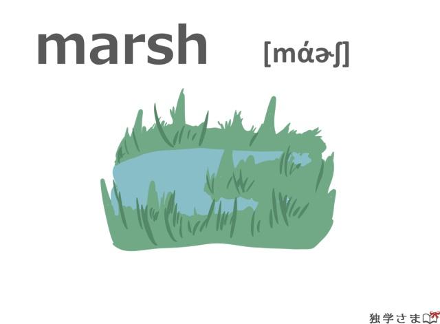 英単語『marsh』イラスト