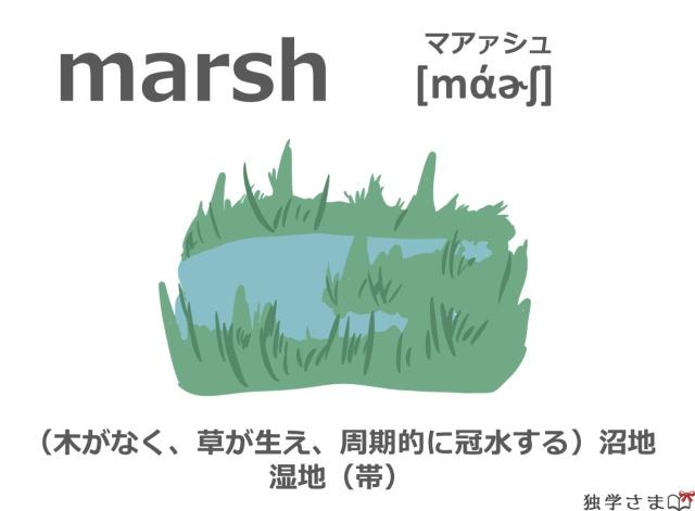 英単語『marsh』イラスト・意味・カタカナ