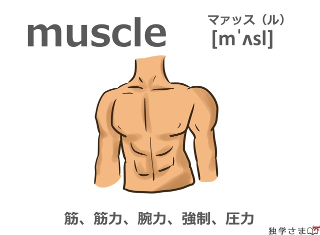 英単語『muscle』イラスト・意味・カタカナ